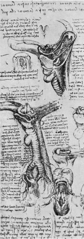 Da Vinci's Depiction of the Thyroid