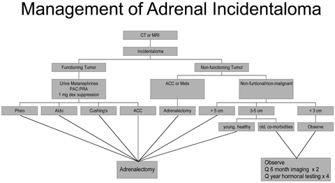 Management of Adrenal Incidentaloma (PDF)