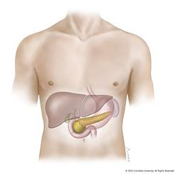pancreases
